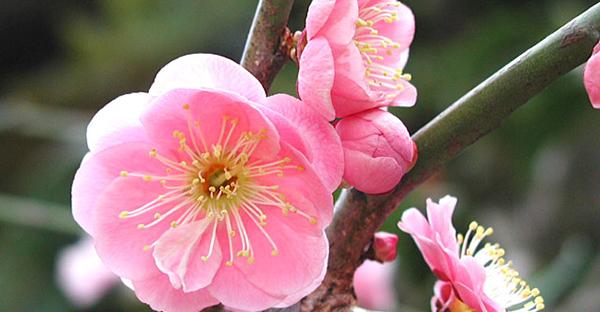 日本の花と言えば☆和を代表する7つの花々と花言葉
