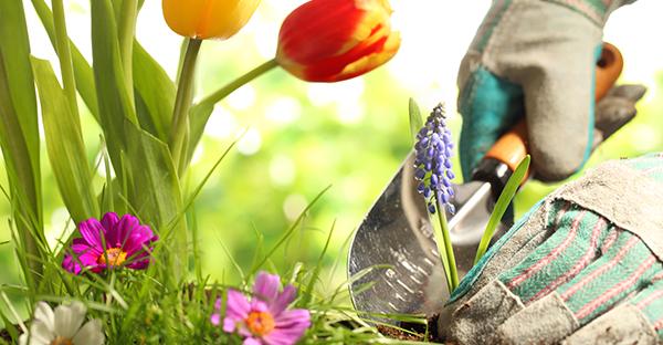 4月に花を植える☆初めてさんにすすめる7つの花々