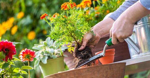 8月に花を楽しむ☆春から植えたい7つのおすすめ
