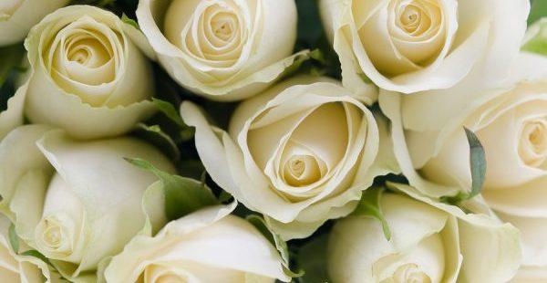 白いバラの花言葉を使って気持ちを伝える5つのポイント