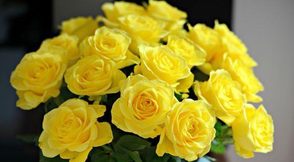 黄色いバラの花言葉、意味と役立つ5つの知識