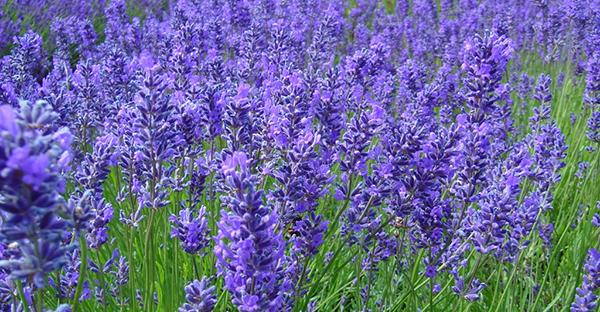 6月の花ガーデニング☆初夏を彩る、おすすめ7つの花々
