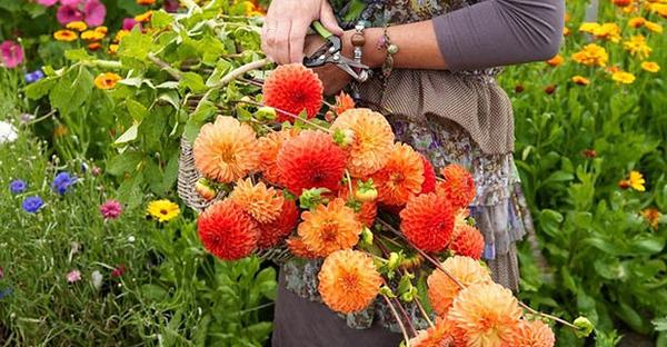 春に咲く花から始める☆初心者でも育てやすい花々
