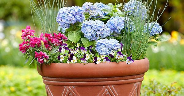 6月の花寄せ植え☆鉢植えで楽しむおすすめアレンジ