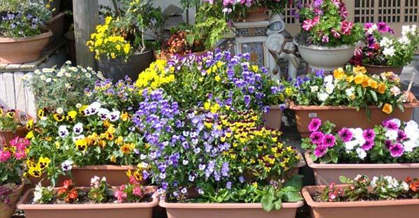 ガーデニングに挑戦!初めてさんにおすすめの7つの花々