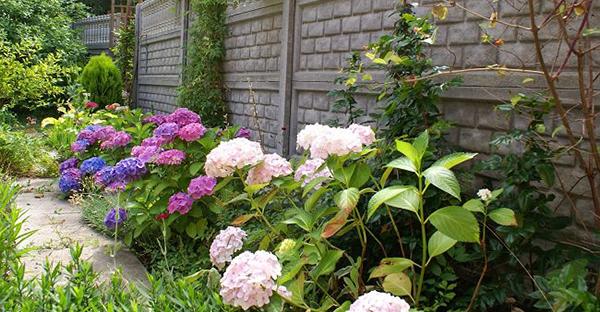 6月の花を庭で楽しむ☆カラフルに彩る7つの花々