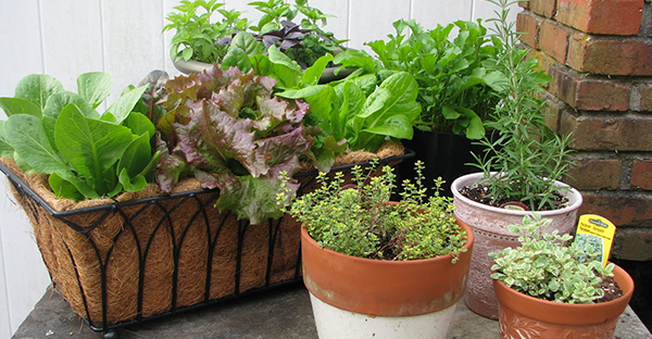 野菜の育て方は簡単☆ベランダで始める7つの手順