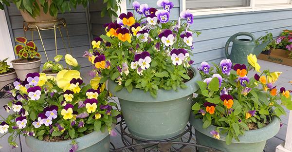 春に咲く花で庭を楽しむ☆主役も脇役も!人気7つの花々