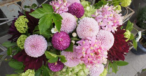 菊の花言葉は色で選ぶ☆可愛い品種と色別7つのメッセージ