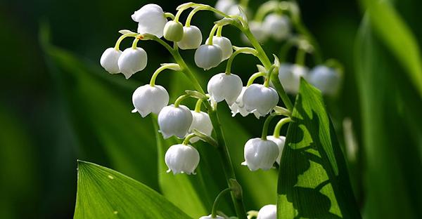 5月の花と花言葉☆女性のタイプで選ぶ、おすすめの花々