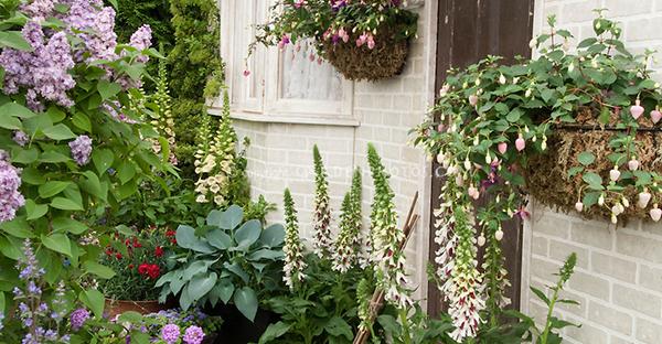 6月の花の寄せ植え☆おすすめの花材と組み合わせ