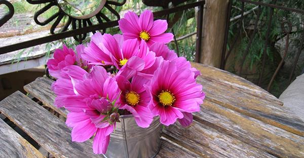 9月の花ギフト☆ブーケに花束におすすめ!7つの花々