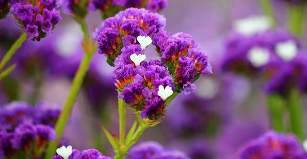 5月の誕生花と花言葉☆贈り物に添える7つのメッセージ