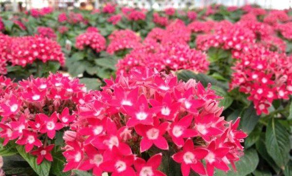 初心者でも育てやすい花、5つのおすすめ品種