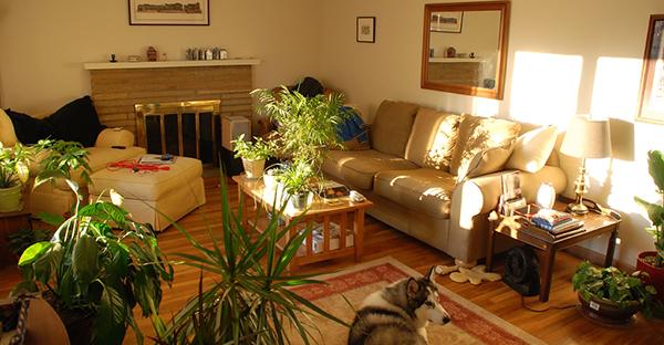 観葉植物を風水で選ぶなら☆家族におすすめ7つの植物