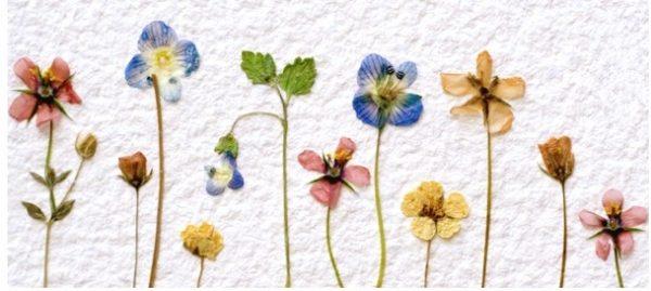 押し花の作り方がマスターできる5つの手順