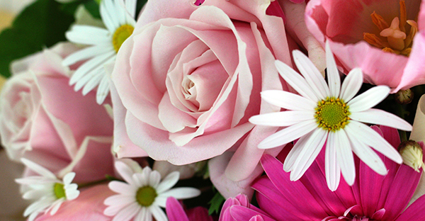 4月の誕生花でお祝い☆シーン別おすすめの花々と贈り方