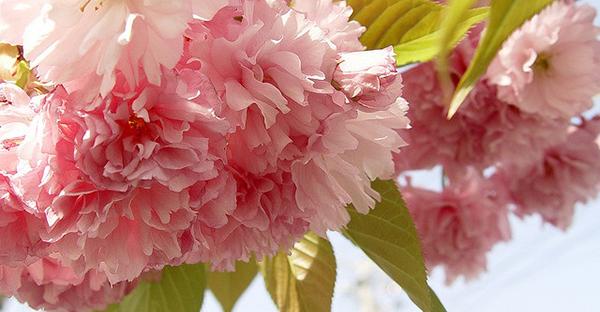 4月の誕生花とメッセージ☆シーン別おすすめ7つの花々