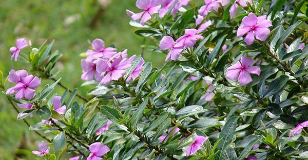 7月の花のガーデニング☆春から始めて楽しむ7つの花々