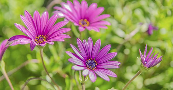 8月の誕生花でお祝い☆プレゼントに添えたい7つの花々