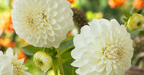 9月の誕生花でお祝い☆花束にしたい花々とアレンジ