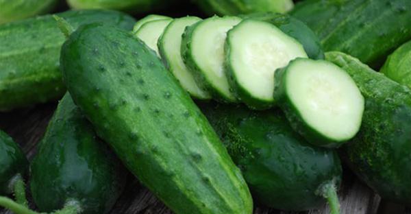 きゅうり栽培は簡単!緑のカーテンにもなる7つのコツ