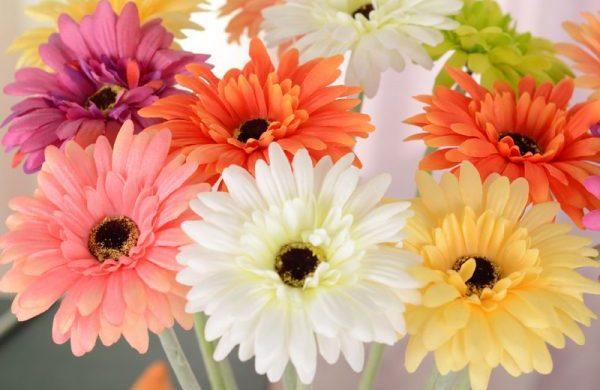 花言葉別にガーベラを贈る時知っておくべき5色の意味