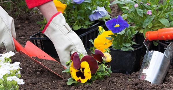 園芸を始めるなら☆楽しく手入れができるおすすめの花々