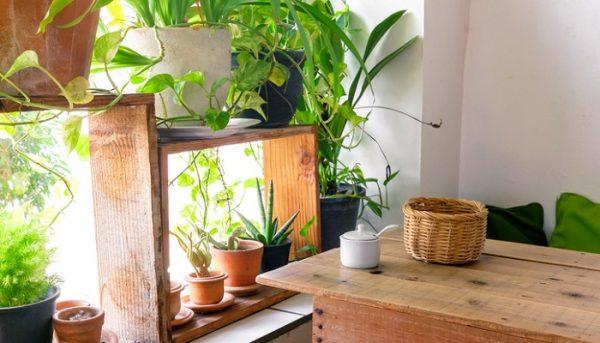 観葉植物に虫が湧かない育て方5つのポイント