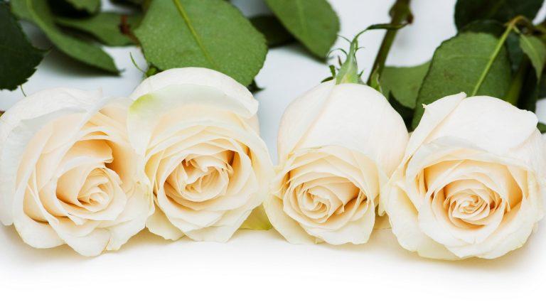 白薔薇の花言葉を使って相手を感動させる5つのコツ
