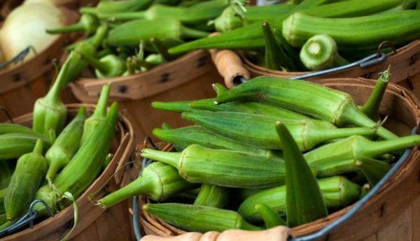 オクラ栽培、プランターで増やす5つの方法