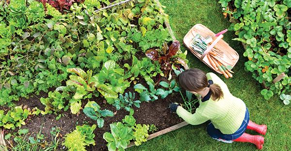 家庭菜園の始め方☆楽しく育てられる、おすすめ野菜