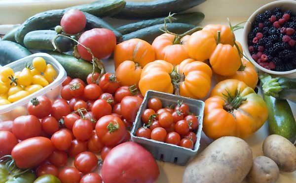 家庭菜園を簡単に始める5つのポイント