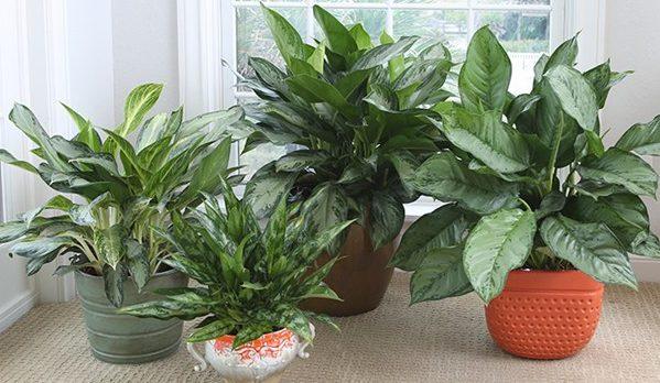 育てやすい観葉植物と長く楽しむ5つの知識