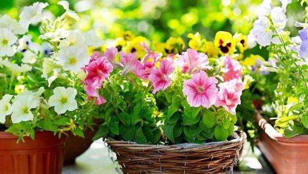 そこで今回は初夏の花がガーデニング初心者に向いてる5つのワケをお伝えします。