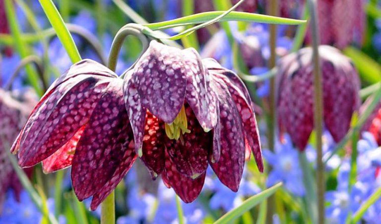 怖い花言葉が隠された贈る前に確認しておくべき5種