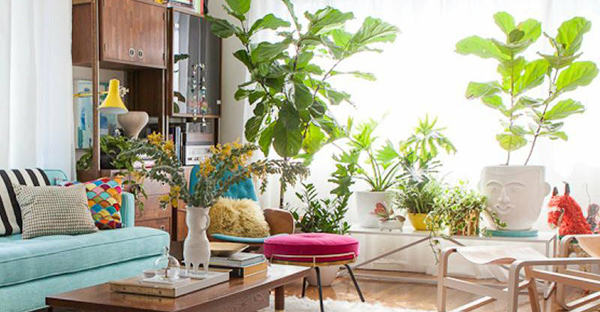 観葉植物は風水で選ぶ☆目的別のおすすめと飾るポイント