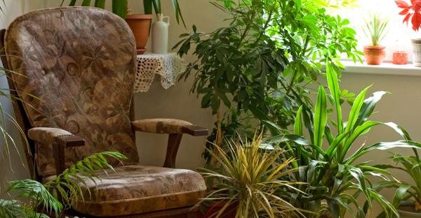 観葉植物で風水☆運気を呼ぶ家づくり、7つのポイント