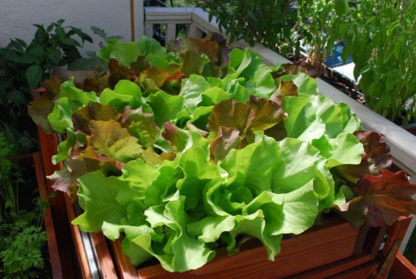 プランターで野菜を増やす5つの方法とは
