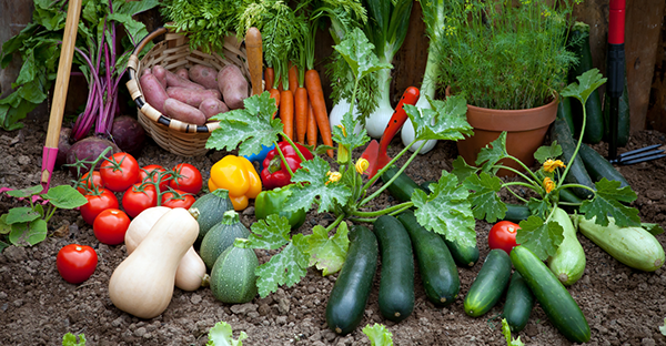 家庭菜園に挑戦するなら☆まず始めたい野菜と育て方
