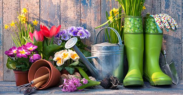 園芸の始め方☆初心者でも安心な、プロがすすめる花々