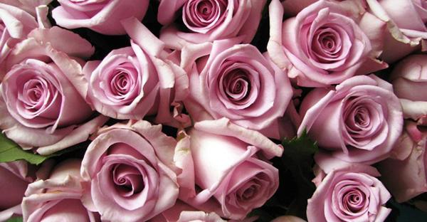誕生花のフラワーギフト☆メッセージで選ぶ7つの花々