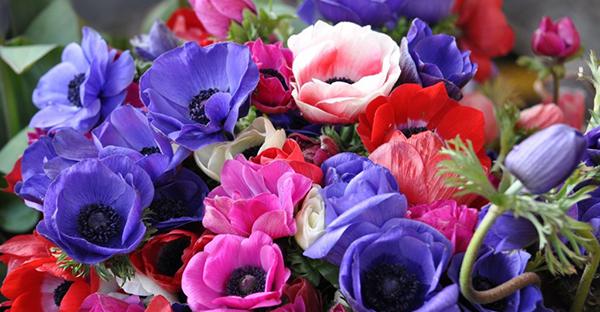 5月の花ガーデン☆初心者ガーデナーに人気、7つの花々