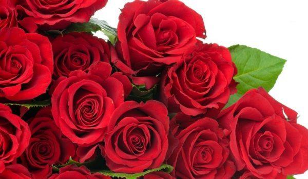 薔薇の花言葉を使って相手を感動させる5つの方法