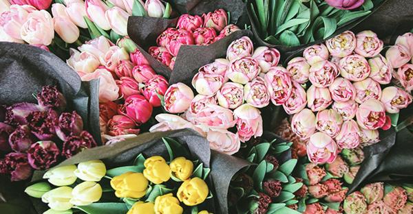 月の花ギフト☆誕生日に嬉しい、季節を彩る7つの花々