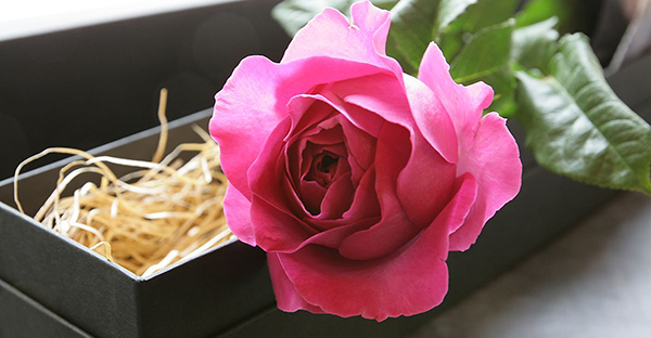 フラワーギフトの選び方☆シーン別に選びたい7つの花々