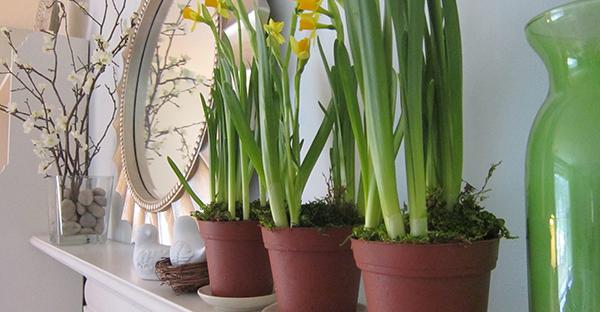 観葉植物を風水で活用!叶えたい願いで選ぶおすすめ植物
