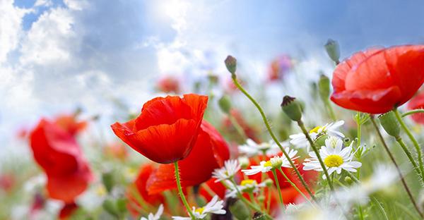 6月の誕生花と花言葉☆ギフトに添えたいメッセージとは