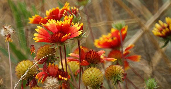 10月の誕生花☆贈られて嬉しい花言葉を持つ7つの花々