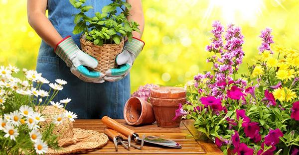 園芸を始めるなら☆初めてさんにおすすめ、7つの植物
